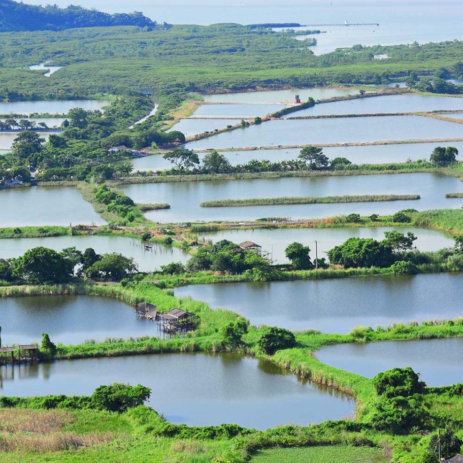 Tilapia Fish Farming